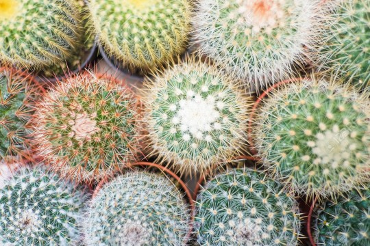 Top view of cactus and succulents background